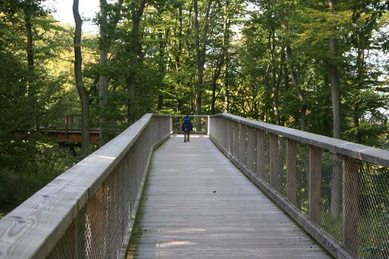 Treetop path - Natural Heritage Centre